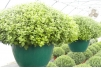 "14"" Saucerless Hanging Basket - Black w/ Wire Hanger"